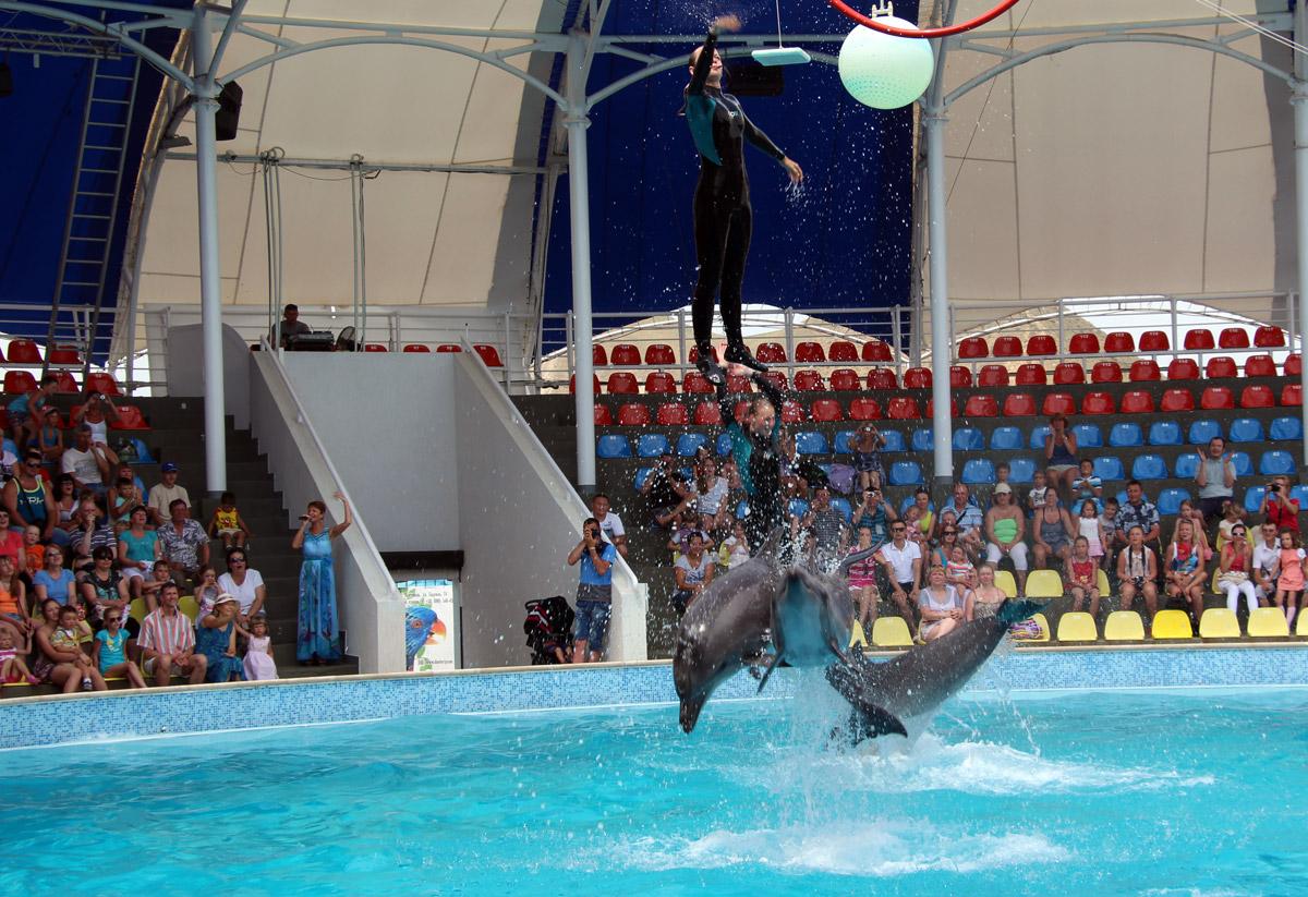 дельфинарий а Коктебеле