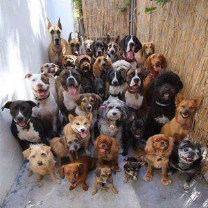 Кошки и собаки ищут настоящих хозяев!