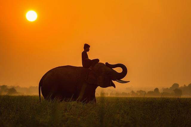 Слон и верёвка
