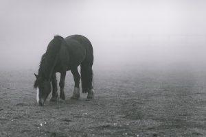 17 лошадей, Хармс